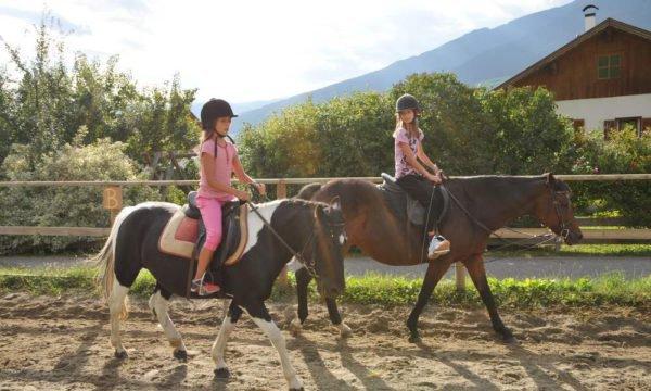 Unsere Pferde warten auf Sie