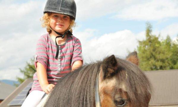 Unsere Pferde freuen sich auf Sie
