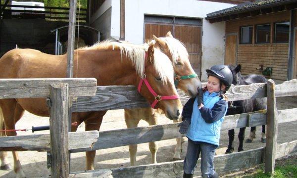 Die Tiere auf unserem Bauernhof Ihre Kinder werden begeistert sein!