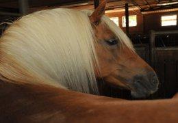 pferde-reiten-02