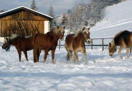 pferde-reiten-06