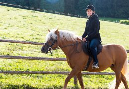 widmannhof-animals-horses-riding-2