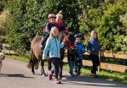 widmannhof-animals-horses-riding-3