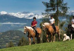 widmannhof-animals-horses-riding-4