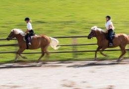 widmannhof-animals-horses-riding-5