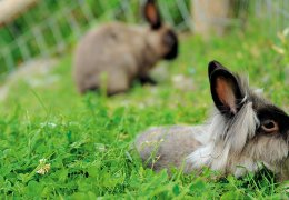 widmannhof-animals-bunny-2