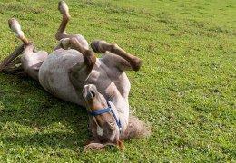 widmannhof-animals-horse-relax