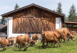 widmannhof-farm-1