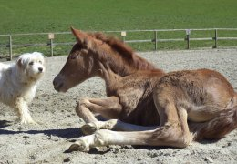 Equitazione 12